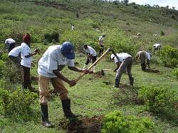 Kenya Trees 4