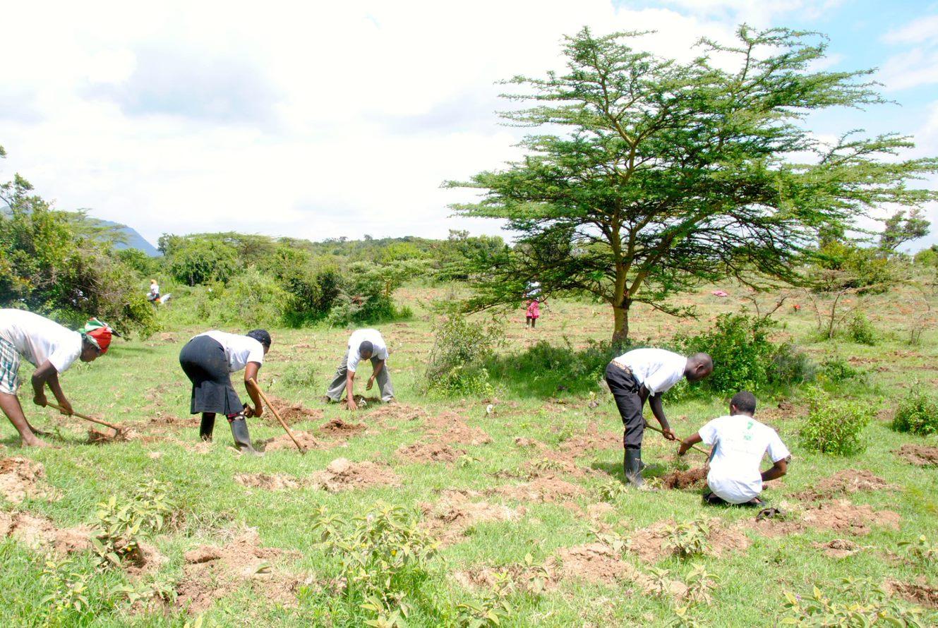 Kenya Trees 2